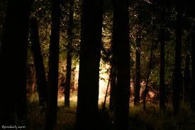 jungle at night